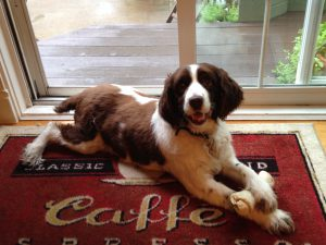 Accéder à « Comment laisser partir le meilleur chien du monde, »